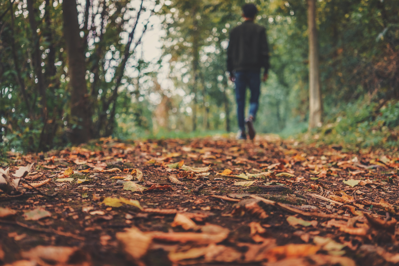 autumn-1869160